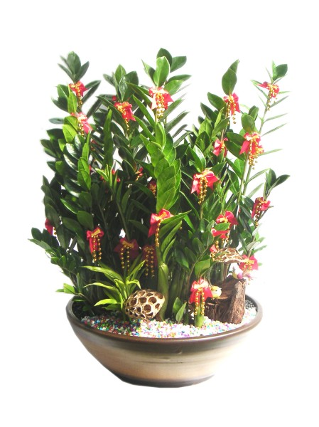 Zamioculcas Zamiifolia Aka Zz Plant Aka 金钱树 Be Your Own